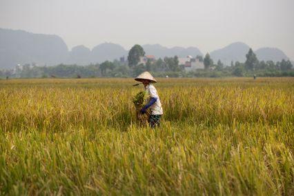 vn-rural-life