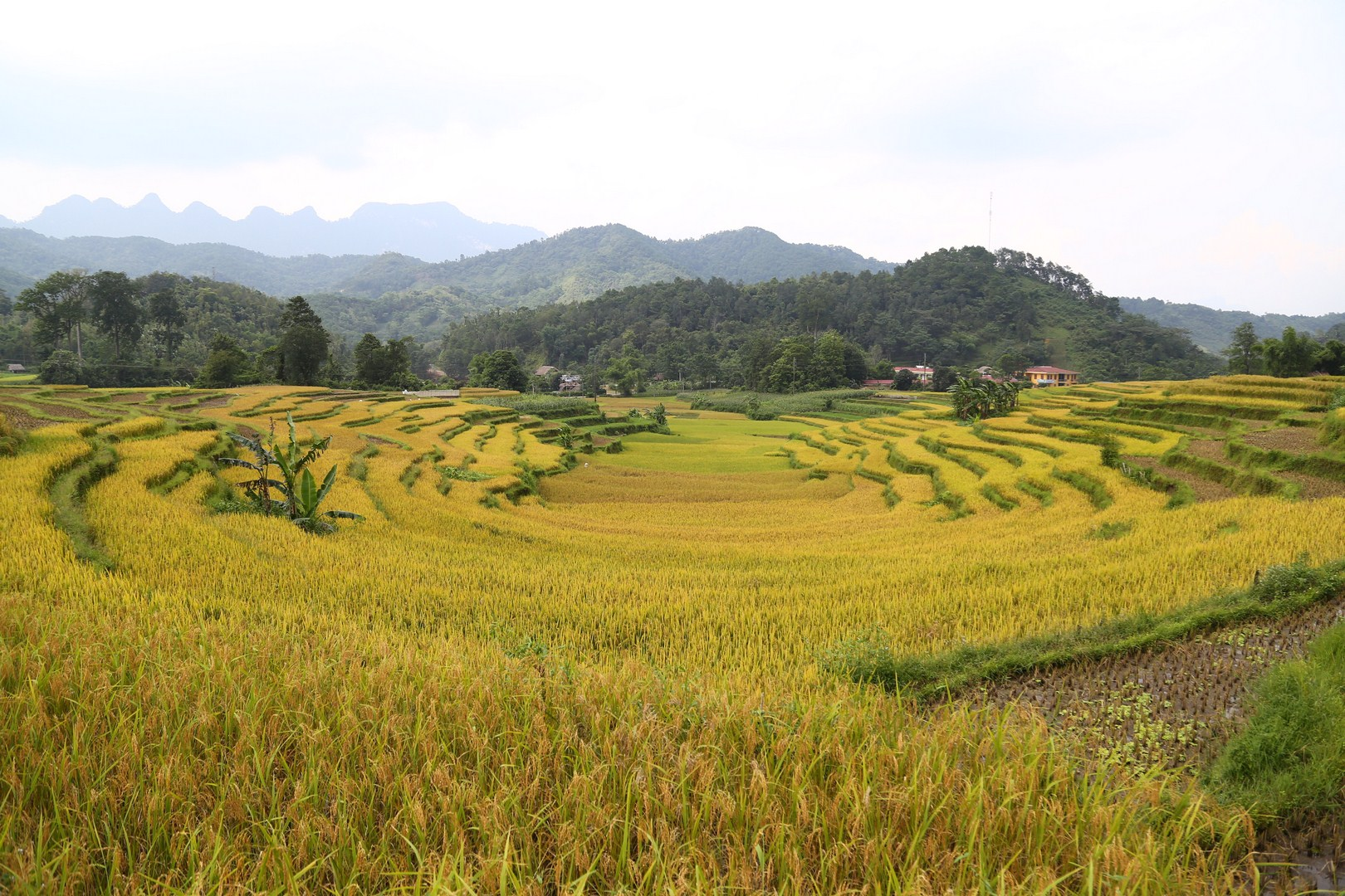 Hagiang - Harvest (2)
